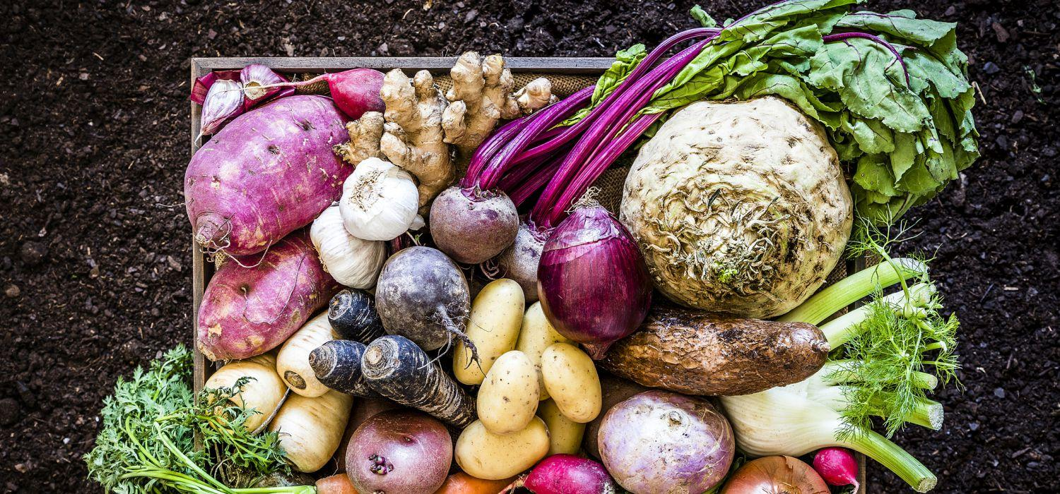 a variety of vegetables in a tray